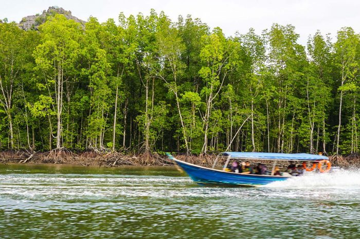3 Hours Private Mangrove Tour